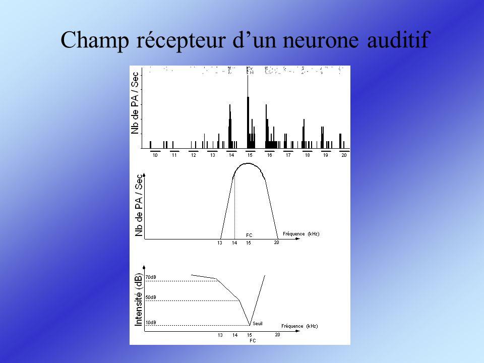 Champ récepteur dun neurone auditif
