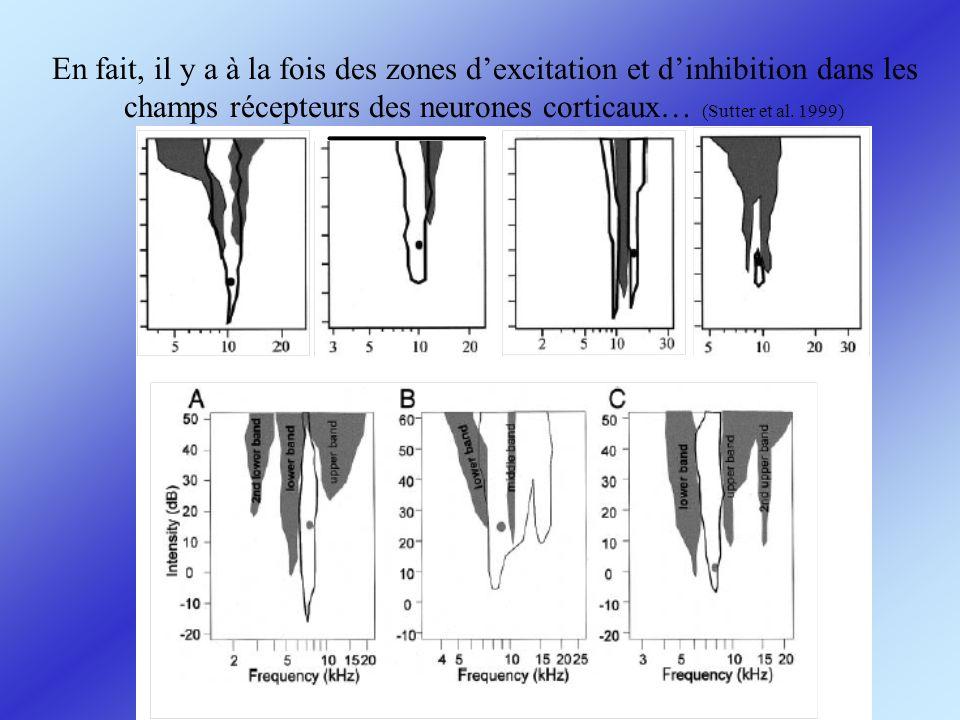En fait, il y a à la fois des zones dexcitation et dinhibition dans les champs récepteurs des neurones corticaux… (Sutter et al. 1999)
