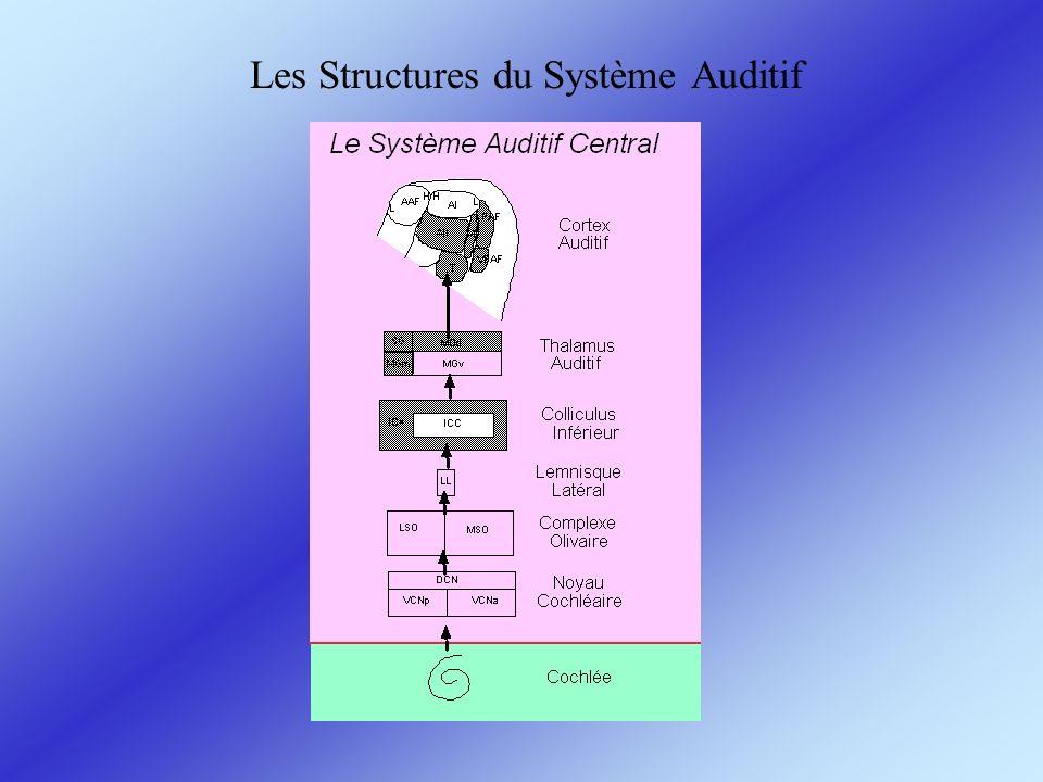 Les Structures du Système Auditif