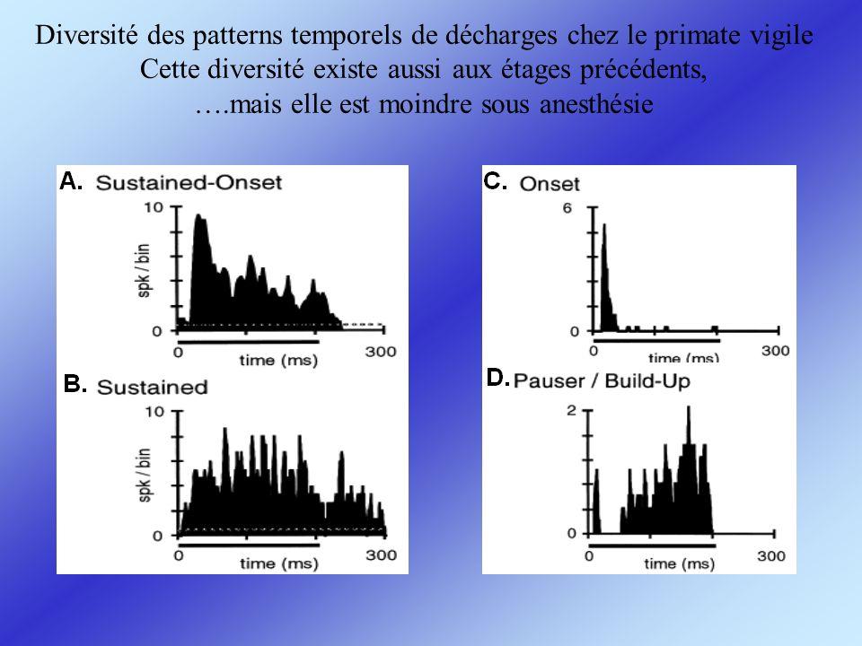 Diversité des patterns temporels de décharges chez le primate vigile Cette diversité existe aussi aux étages précédents, ….mais elle est moindre sous