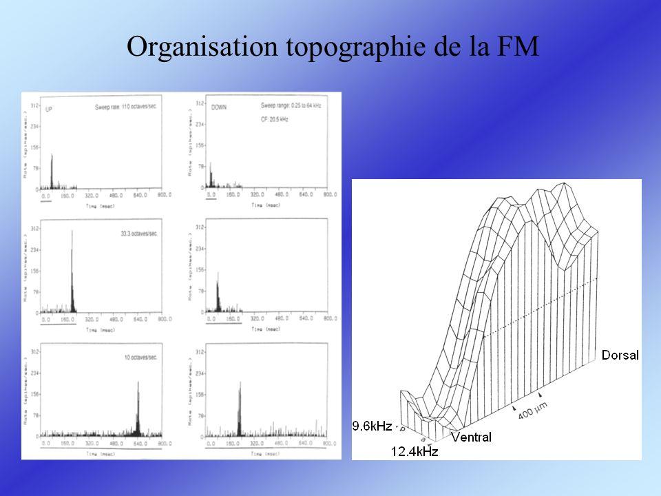 Organisation topographie de la FM