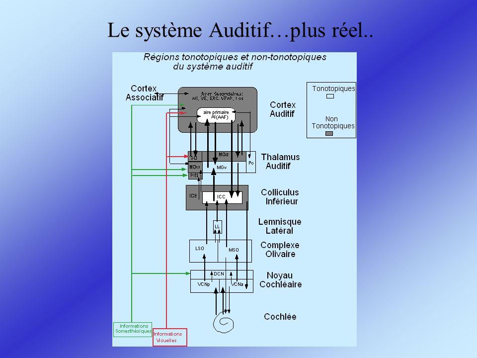 Le système Auditif…plus réel..