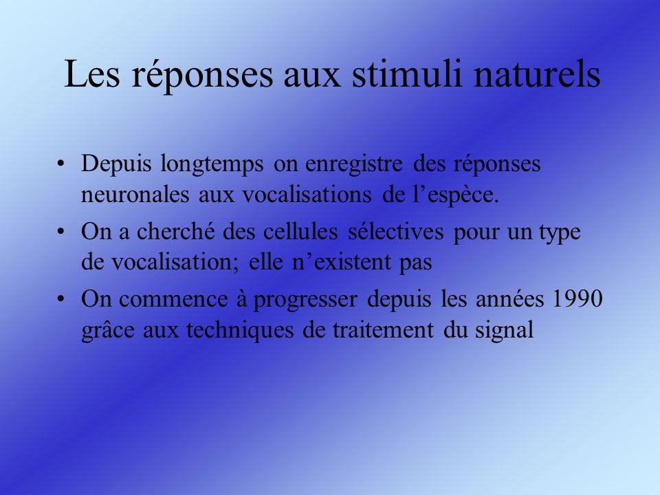 Les réponses aux stimuli naturels Depuis longtemps on enregistre des réponses neuronales aux vocalisations de lespèce. On a cherché des cellules sélec