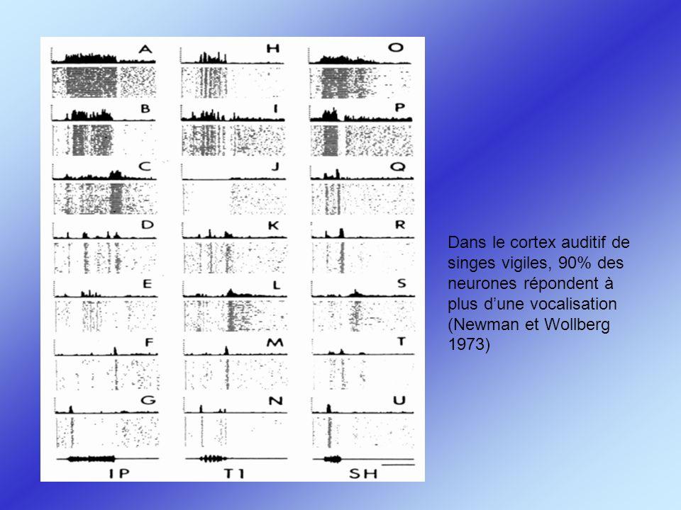 Dans le cortex auditif de singes vigiles, 90% des neurones répondent à plus dune vocalisation (Newman et Wollberg 1973)
