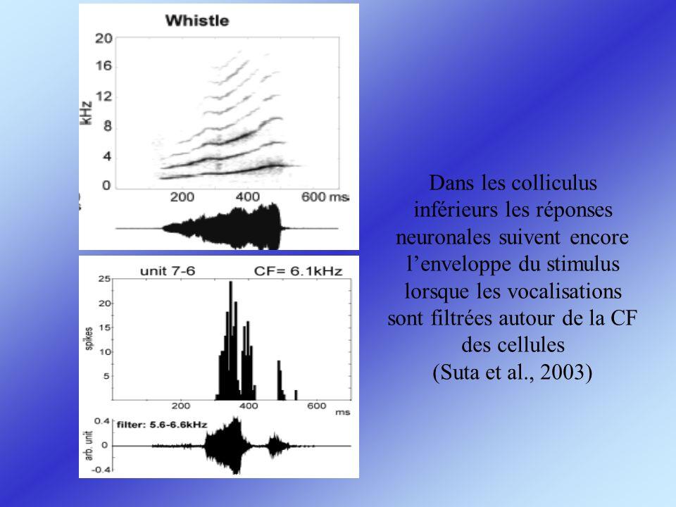 Dans les colliculus inférieurs les réponses neuronales suivent encore lenveloppe du stimulus lorsque les vocalisations sont filtrées autour de la CF d