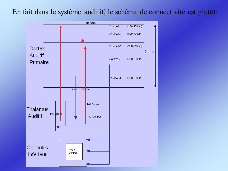 Le protocole de forward masking permet de mettre en évidence les zones dinhibition dans le cortex auditif (Brosch &Schreiner 1997, 2000, Sutter et al 1999)