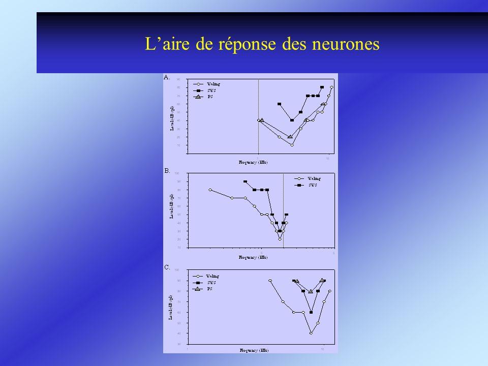 Laire de réponse des neurones