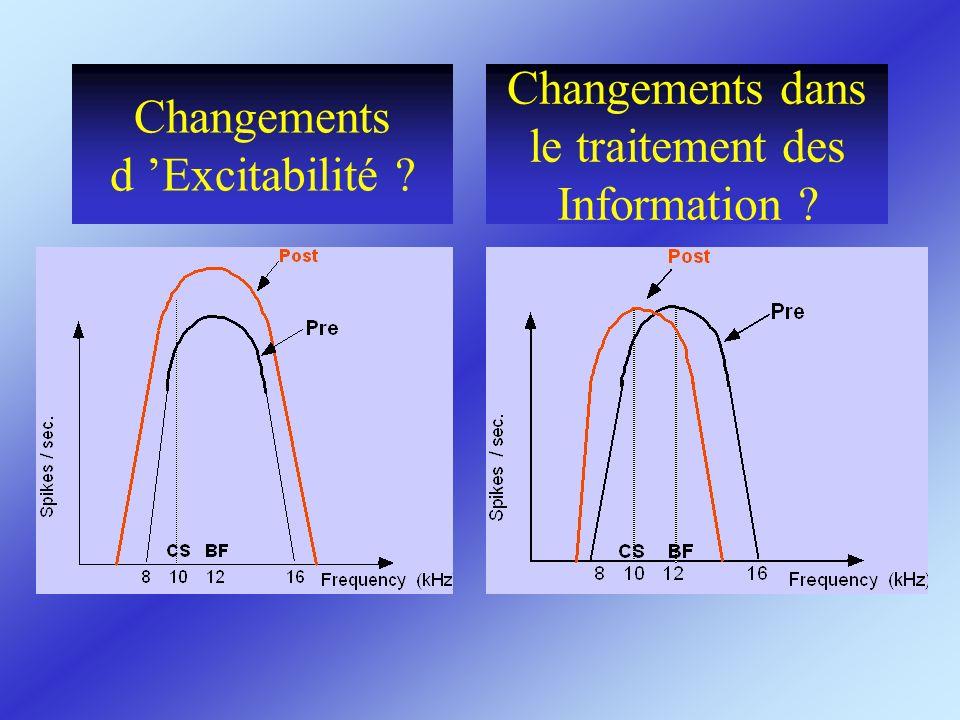 Changements d Excitabilité ? Changements dans le traitement des Information ?