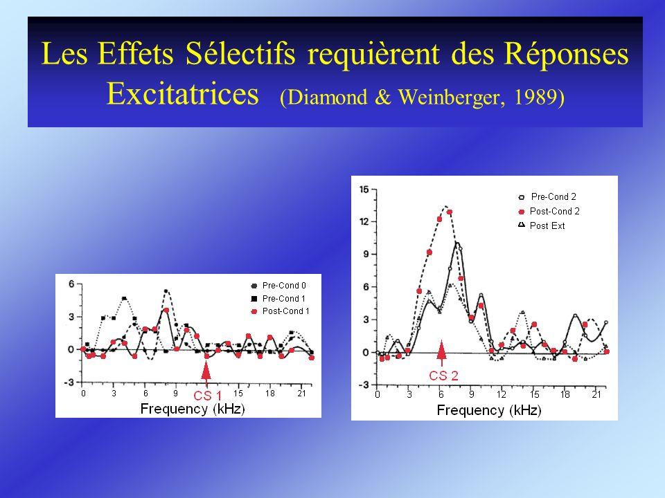 Les Effets Sélectifs requièrent des Réponses Excitatrices (Diamond & Weinberger, 1989)