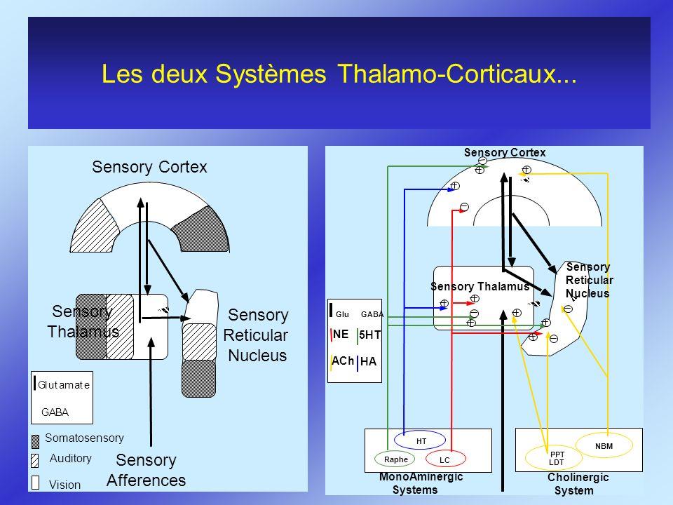 Les deux Systèmes Thalamo-Corticaux... GABA Glutamate NBM PPT LDT LC Raphe HT GluGABA Sensory Cortex Sensory Reticular Nucleus Sensory Thalamus Sensor