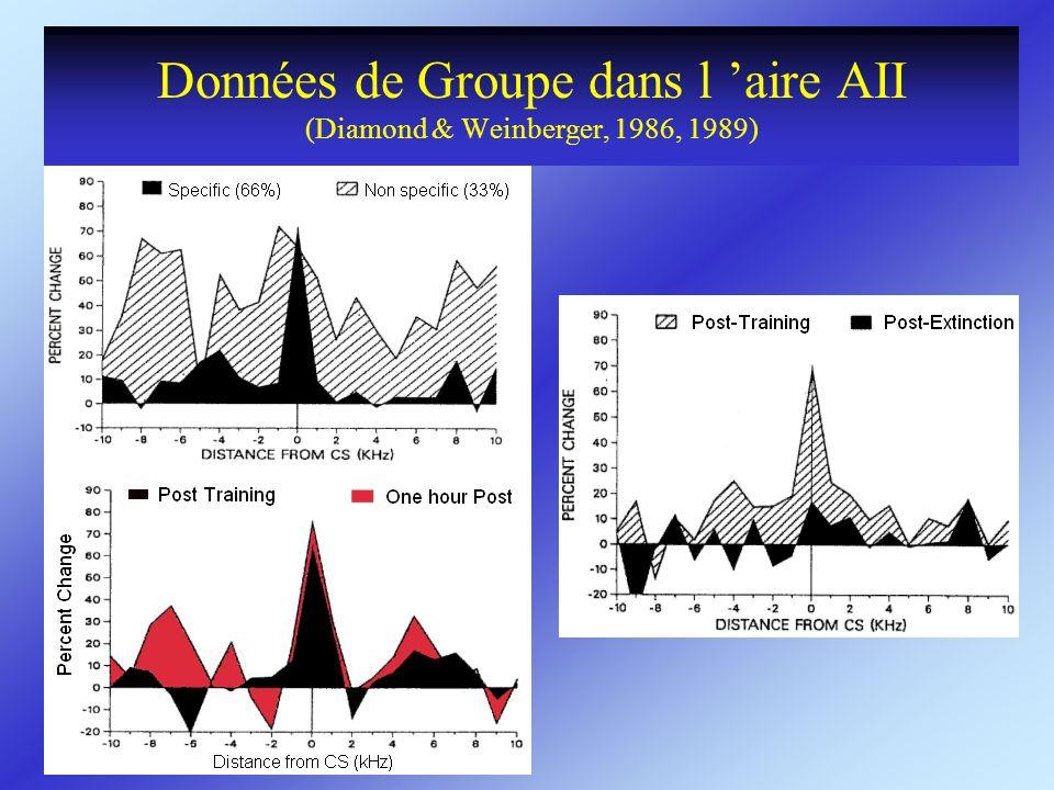 Données de Groupe dans l aire AII (Diamond & Weinberger, 1986, 1989)