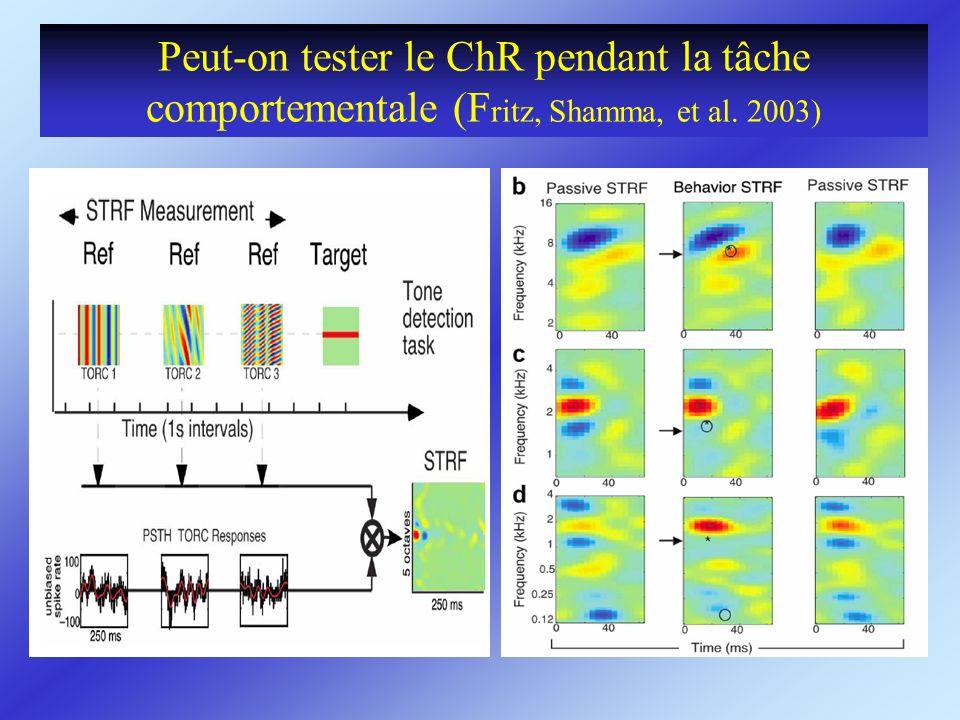 Peut-on tester le ChR pendant la tâche comportementale (F ritz, Shamma, et al. 2003)
