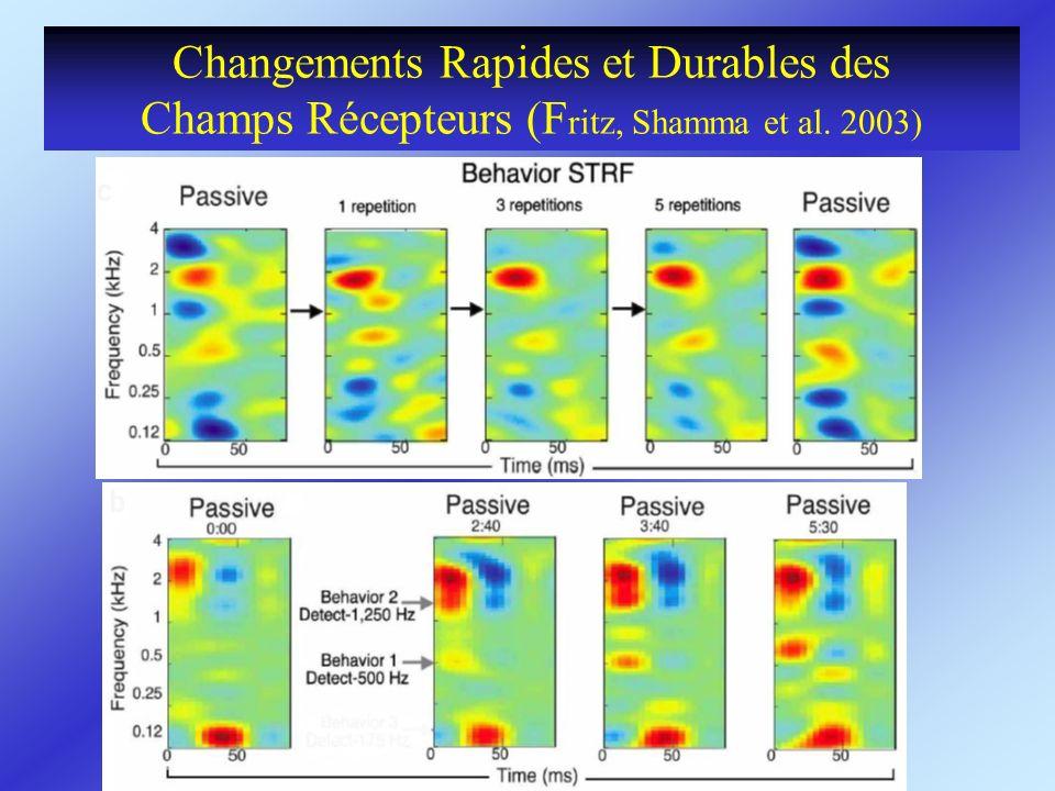 Changements Rapides et Durables des Champs Récepteurs (F ritz, Shamma et al. 2003)