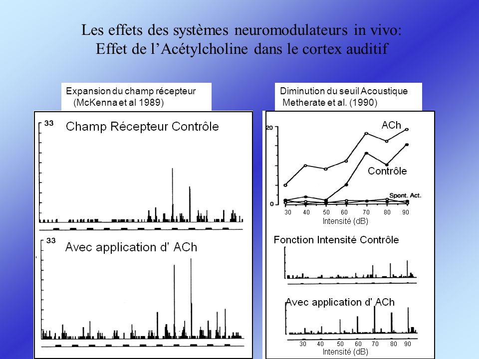 Les effets des systèmes neuromodulateurs in vivo: Effet de lAcétylcholine dans le cortex auditif Expansion du champ récepteur (McKenna et al 1989) Dim