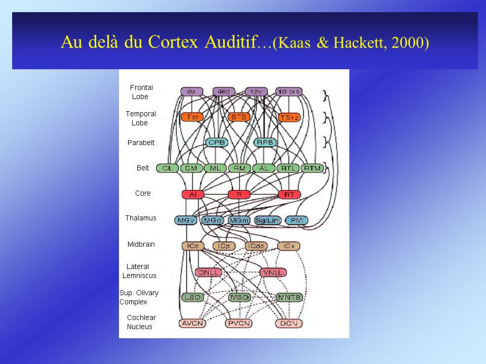 Au delà du Cortex Auditif …(Kaas & Hackett, 2000)