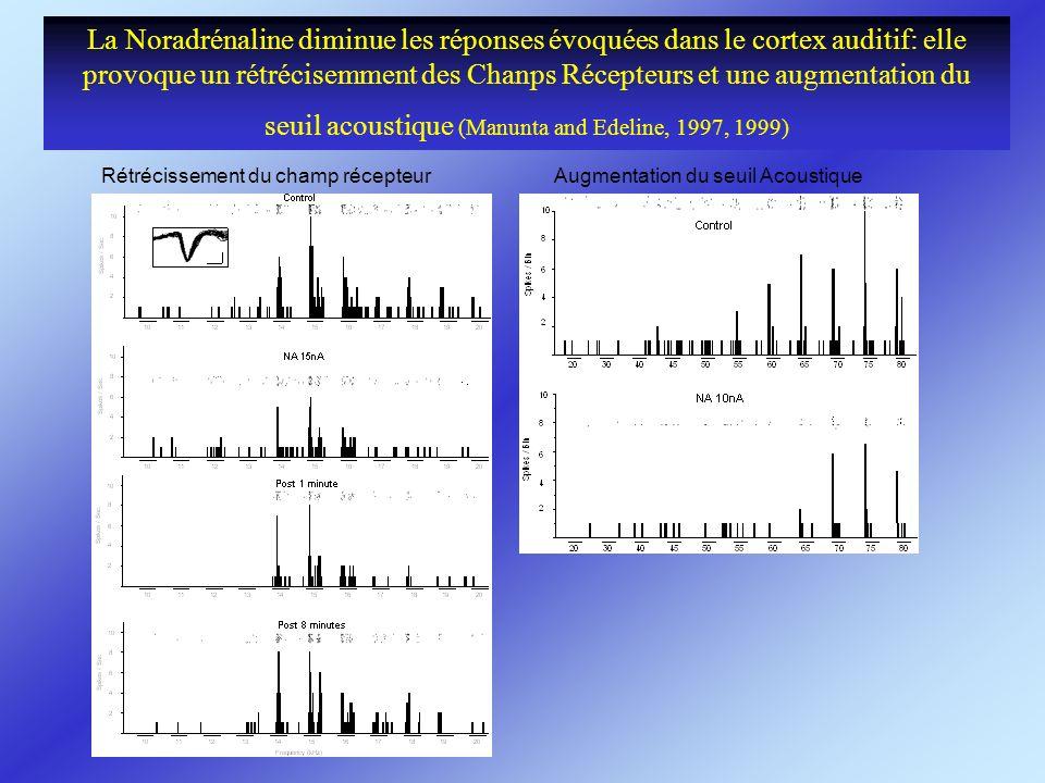 La Noradrénaline diminue les réponses évoquées dans le cortex auditif: elle provoque un rétrécisemment des Chanps Récepteurs et une augmentation du se