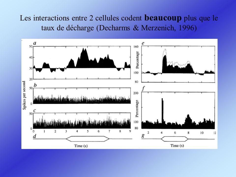 Les interactions entre 2 cellules codent beaucoup plus que le taux de décharge (Decharms & Merzenich, 1996)