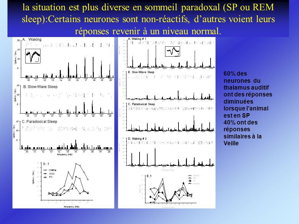 la situation est plus diverse en sommeil paradoxal (SP ou REM sleep):Certains neurones sont non-réactifs, dautres voient leurs réponses revenir à un n
