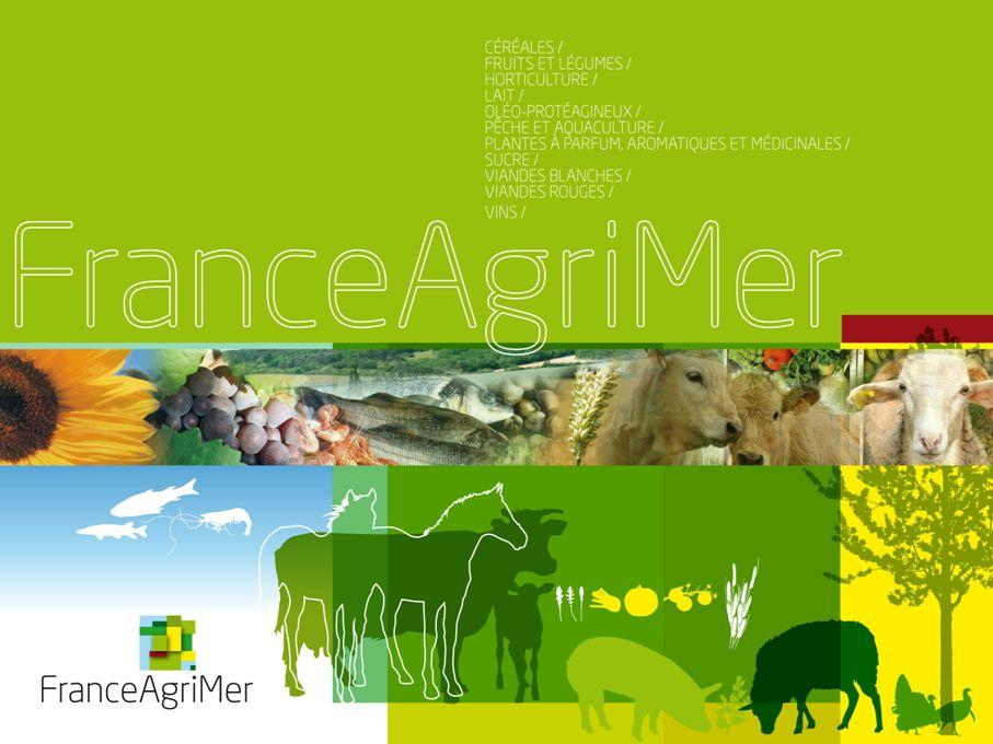 Observatoire des prix et des marges 19 octobre 2011 Groupe de travail filière viande bovine
