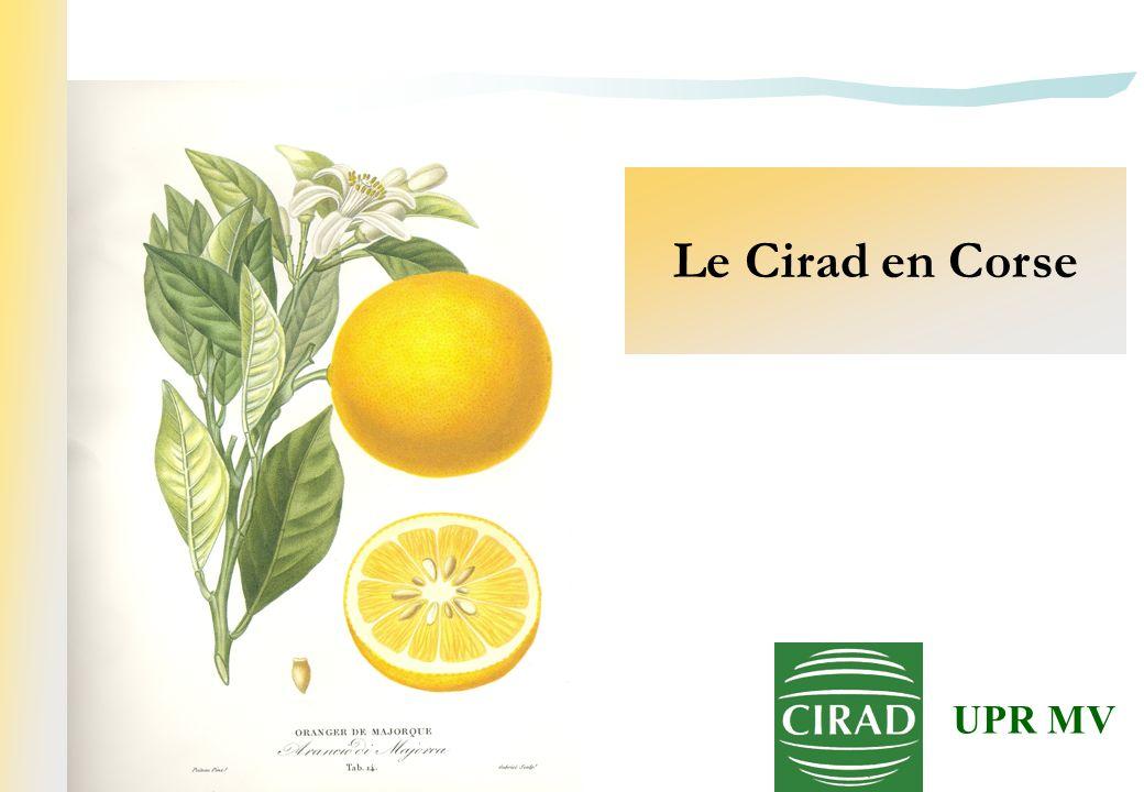 Le Cirad en Corse UPR MV