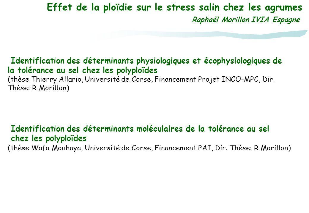 Effet de la ploïdie sur le stress salin chez les agrumes Raphaël Morillon IVIA Espagne Identification des déterminants moléculaires de la tolérance au