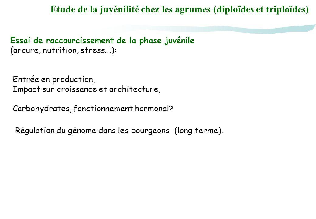 Etude de la juvénilité chez les agrumes (diploïdes et triploïdes) Essai de raccourcissement de la phase juvénile (arcure, nutrition, stress...): Entré