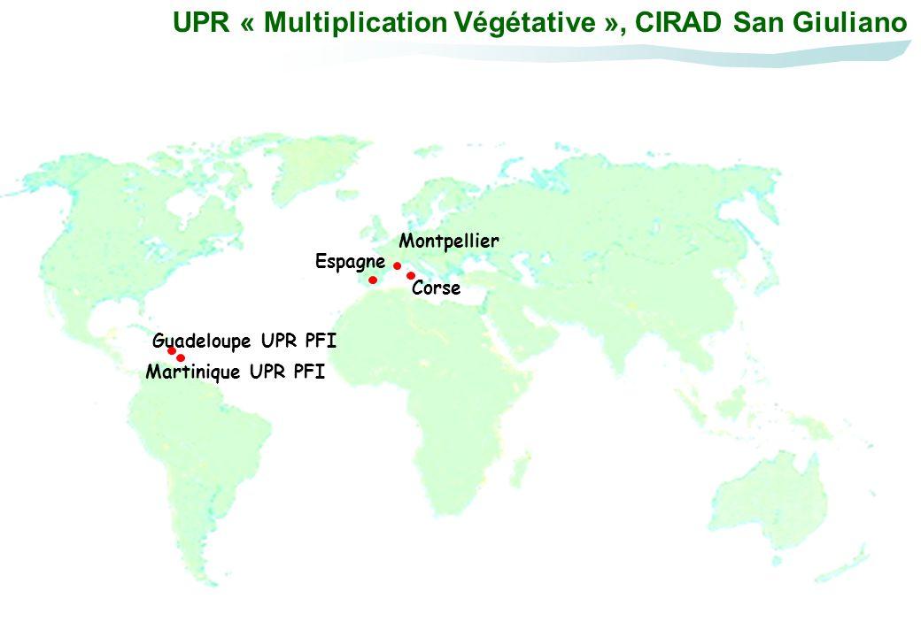 Corse, INRA et Université Montpellier Espagne Les partenariats nationaux et internationaux Guadeloupe UPR PFI Martinique UPR PFI Turquie Maroc Vietnam AGI Nouvelle Calédonie IAC Chili Un.