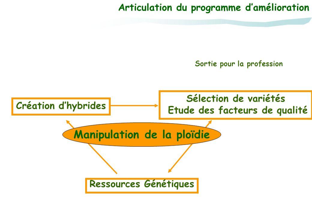 Articulation du programme damélioration Ressources Génétiques Création dhybrides Sélection de variétés Etude des facteurs de qualité Sortie pour la pr