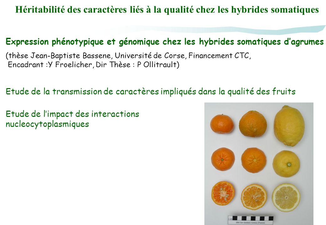 Héritabilité des caractères liés à la qualité chez les hybrides somatiques Etude de limpact des interactions nucleocytoplasmiques Etude de la transmis