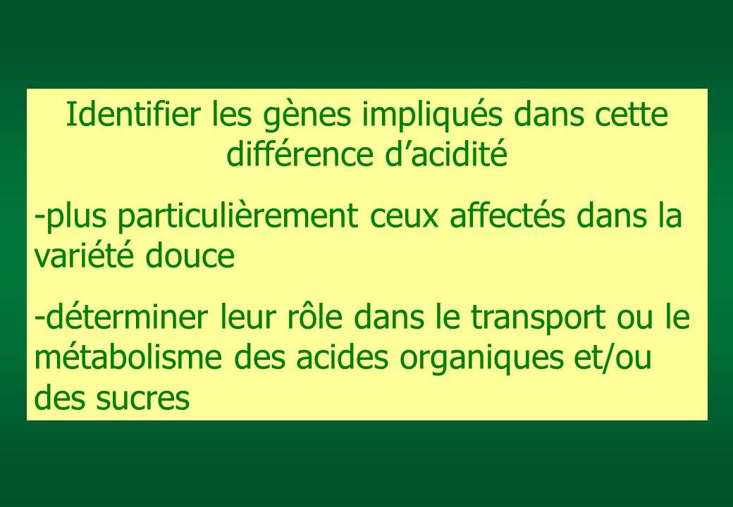 Identifier les gènes impliqués dans cette différence dacidité -plus particulièrement ceux affectés dans la variété douce -déterminer leur rôle dans le