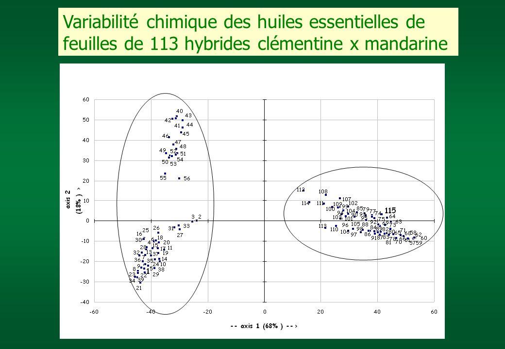 Variabilité chimique des huiles essentielles de feuilles de 113 hybrides clémentine x mandarine