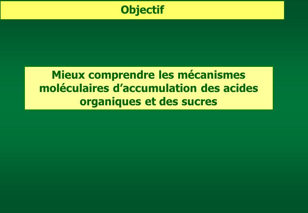 Mieux comprendre les mécanismes moléculaires daccumulation des acides organiques et des sucres Objectif
