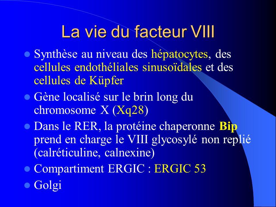 La vie du facteur VIII Synthèse au niveau des hépatocytes, des cellules endothéliales sinusoïdales et des cellules de Küpfer Gène localisé sur le brin