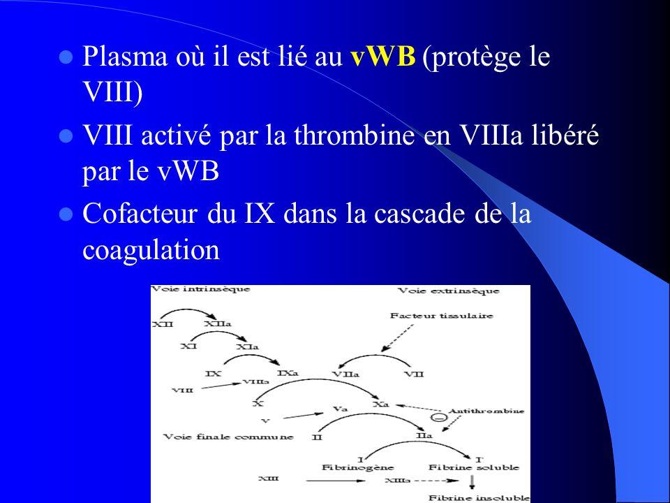 Plasma où il est lié au vWB (protège le VIII) VIII activé par la thrombine en VIIIa libéré par le vWB Cofacteur du IX dans la cascade de la coagulatio