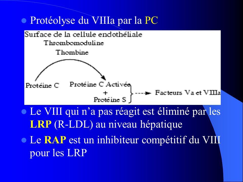 Le VIII qui na pas réagit est éliminé par les LRP (R-LDL) au niveau hépatique Le RAP est un inhibiteur compétitif du VIII pour les LRP Protéolyse du V