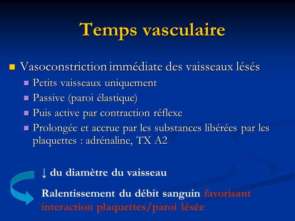 Temps vasculaire Vasoconstriction immédiate des vaisseaux lésés Vasoconstriction immédiate des vaisseaux lésés Petits vaisseaux uniquement Petits vais