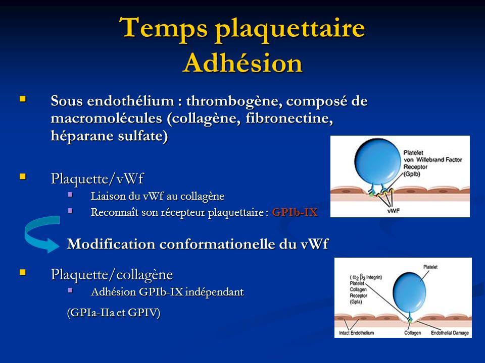 Temps plaquettaire Adhésion Sous endothélium : thrombogène, composé de macromolécules (collagène, fibronectine, héparane sulfate) Sous endothélium : t