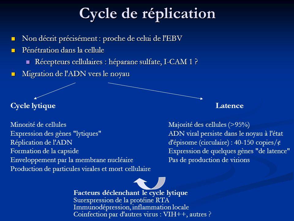 Cycle de réplication Non décrit précisément : proche de celui de l'EBV Non décrit précisément : proche de celui de l'EBV Pénétration dans la cellule P