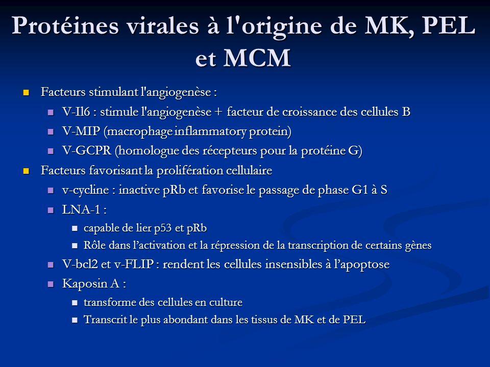 Protéines virales à l'origine de MK, PEL et MCM Facteurs stimulant l'angiogenèse : Facteurs stimulant l'angiogenèse : V-Il6 : stimule l'angiogenèse +
