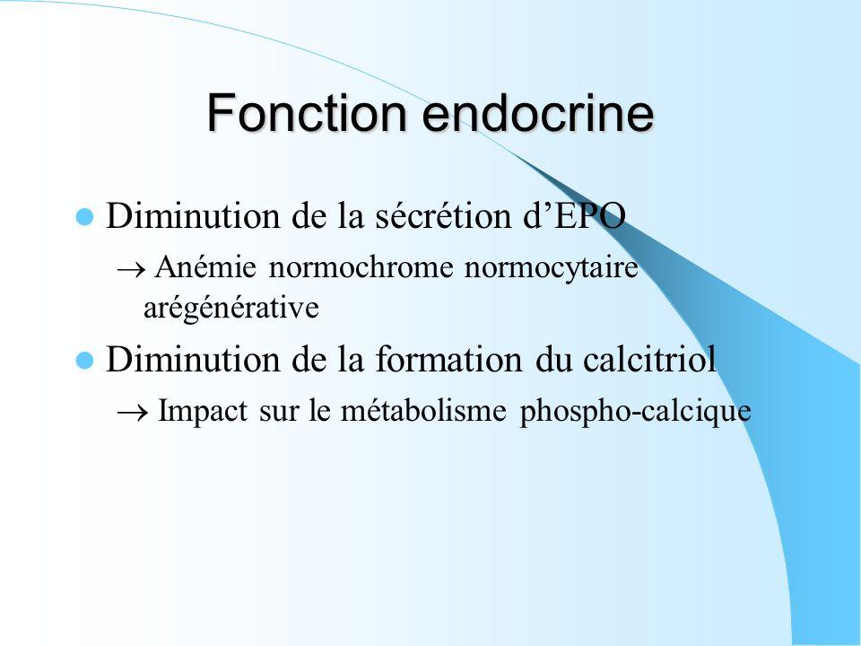 Fonction endocrine Diminution de la sécrétion dEPO Anémie normochrome normocytaire arégénérative Diminution de la formation du calcitriol Impact sur l