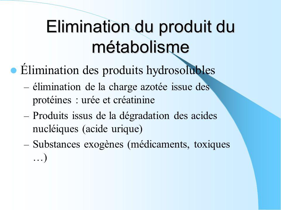 Elimination du produit du métabolisme Élimination des produits hydrosolubles – élimination de la charge azotée issue des protéines : urée et créatinin