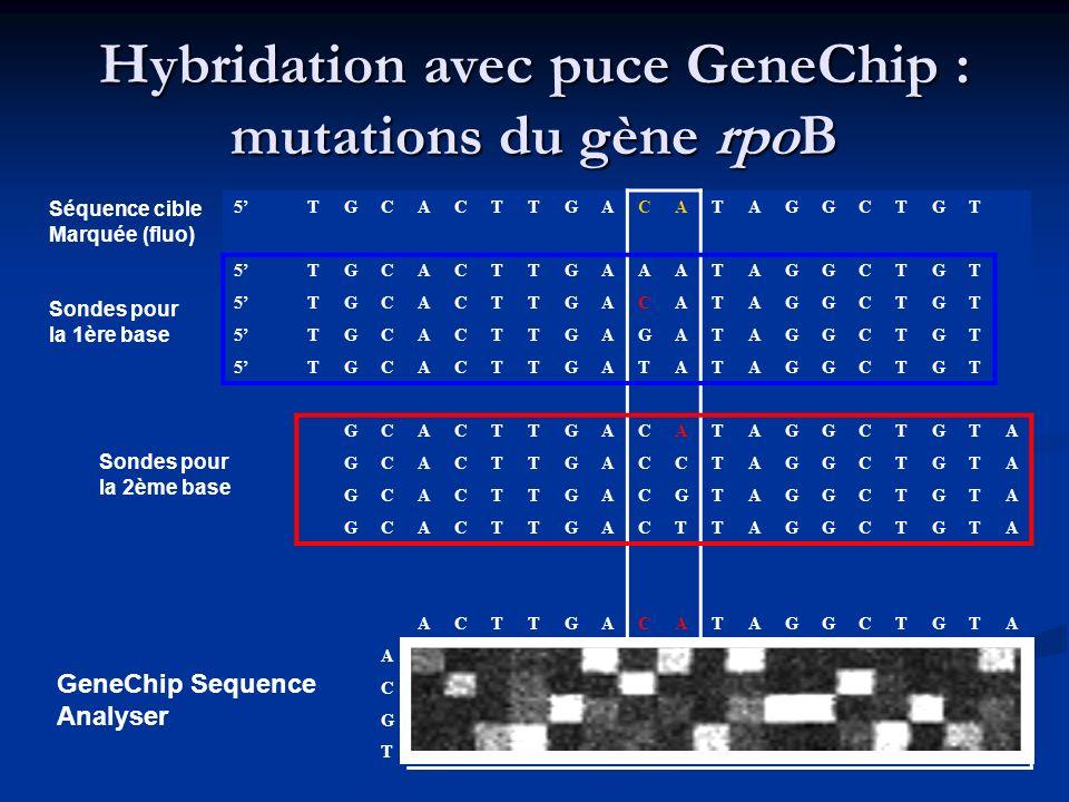 Hybridation avec puce GeneChip : mutations du gène rpoB 5TGCACTTGACATAGGCTGT 5TGCACTTGAAATAGGCTGT 5TGCACTTGACATAGGCTGT 5TGCACTTGAGATAGGCTGT 5TGCACTTGA