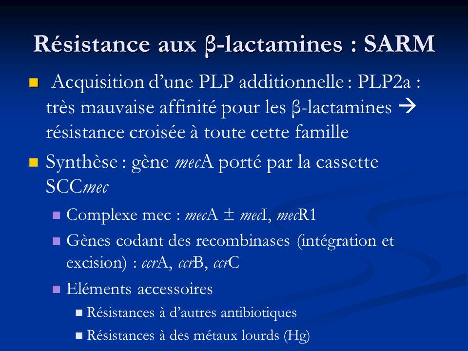 Résistance aux β-lactamines : SARM Acquisition dune PLP additionnelle : PLP2a : très mauvaise affinité pour les β-lactamines résistance croisée à tout