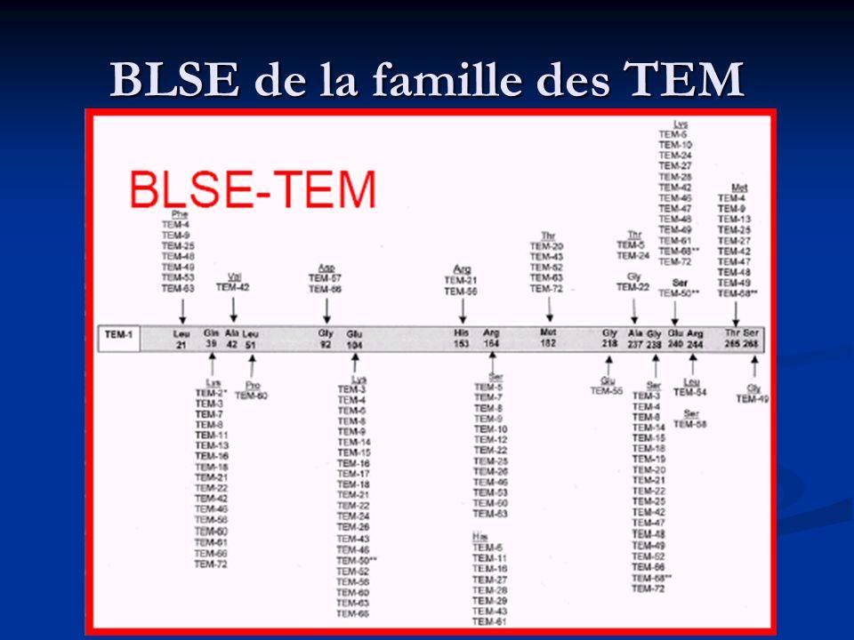 BLSE de la famille des TEM