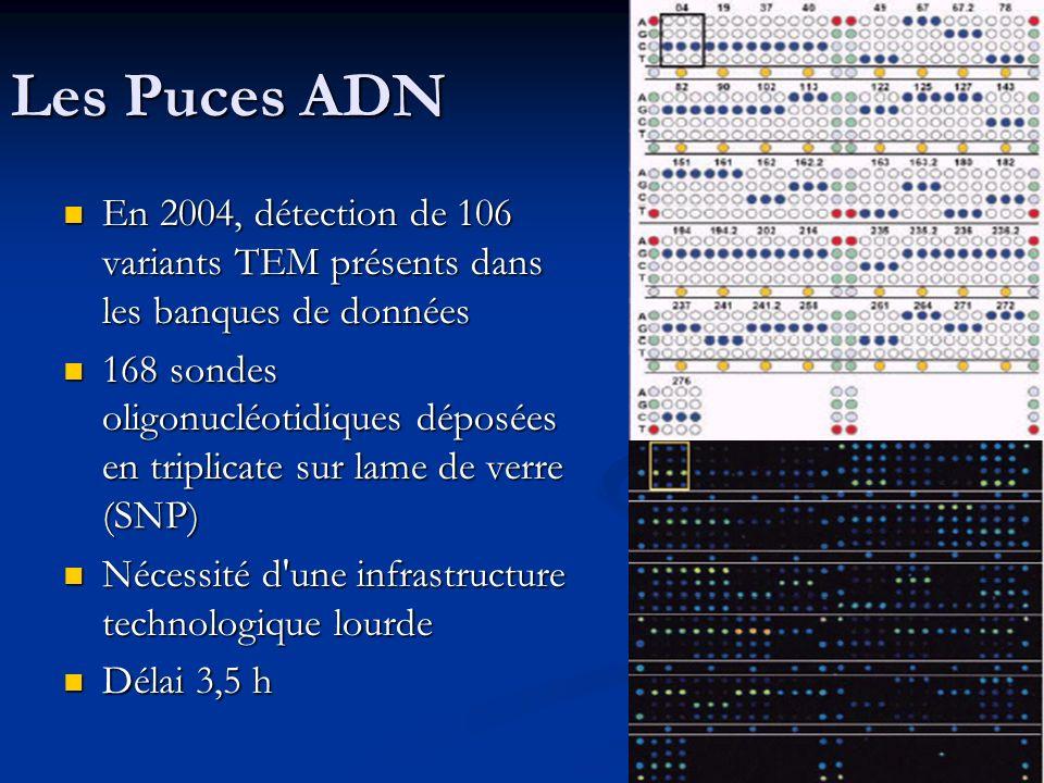 Les Puces ADN En 2004, détection de 106 variants TEM présents dans les banques de données En 2004, détection de 106 variants TEM présents dans les ban