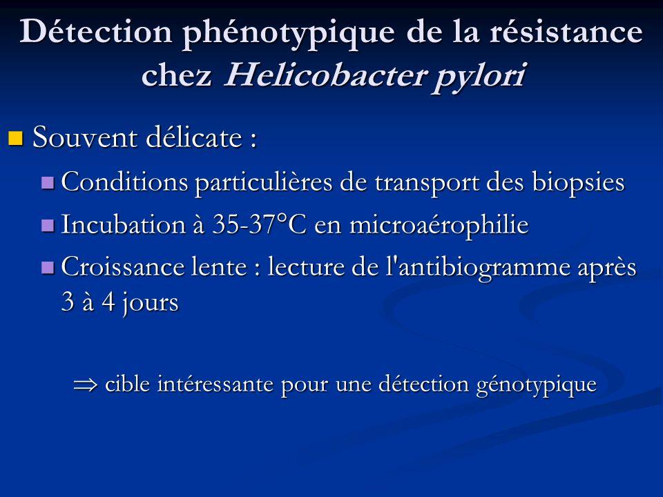 Détection phénotypique de la résistance chez Helicobacter pylori Souvent délicate : Souvent délicate : Conditions particulières de transport des biops
