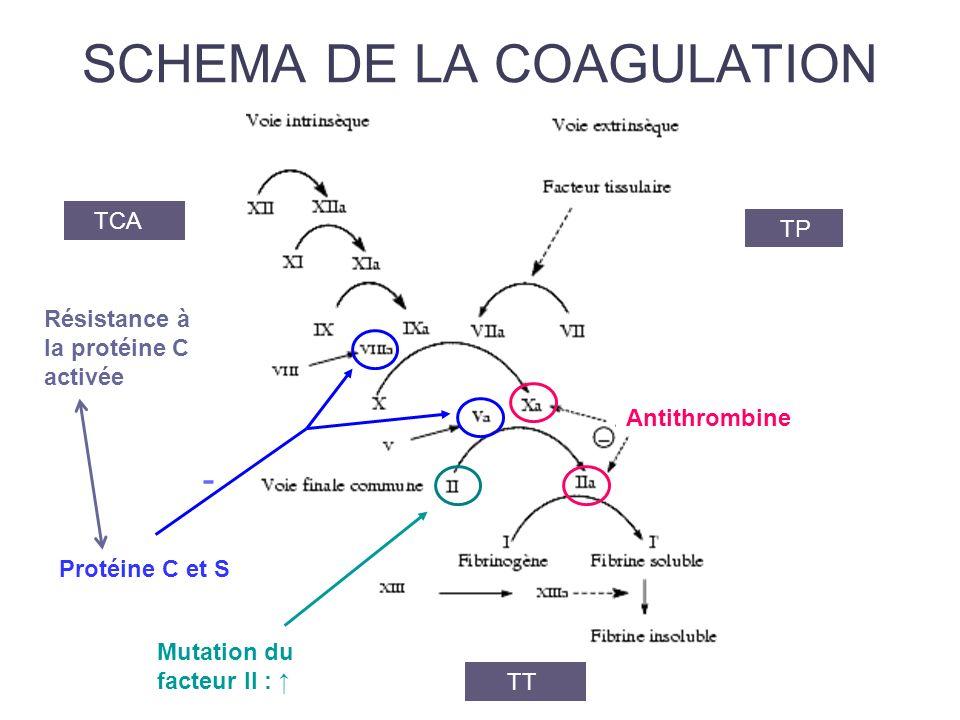 SCHEMA DE LA COAGULATION TCA TP TT Protéine C et S - Résistance à la protéine C activée Mutation du facteur II : Antithrombine