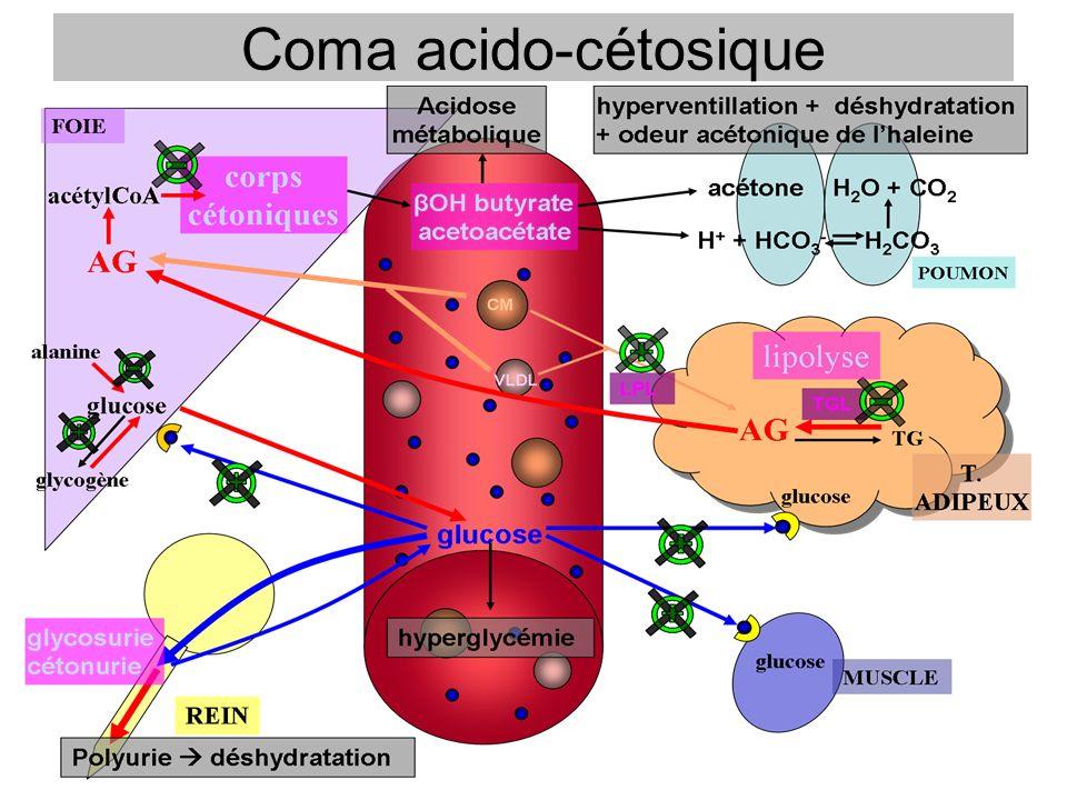Cas clinique Mlle D, 23ans se présente aux urgences à 3h le 27 février 2007 Nausées, vomissements, anorexie depuis 2 jours Pâleur, tachypnée, haleine cétosique, soif Glycémie : 24,4 mmol/L Bandelettes urinaires : glycosurie et cétonurie + GDS –pH : 6,93 –HCO 3 - : 1,2mmol/L –PCO2 : 6mmHg –PO2 : 136 mmHg Trou anionique : 29mmol/L K + : 4mmol/L Prot : 80g/L