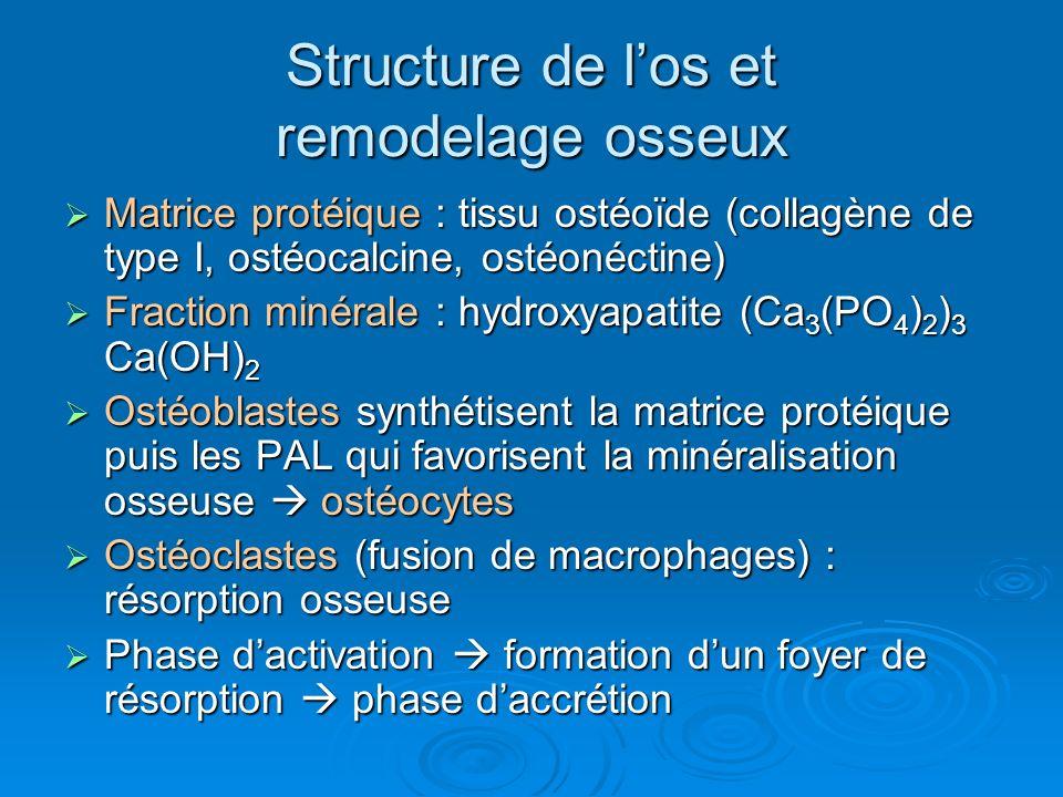 Structure de los et remodelage osseux Matrice protéique : tissu ostéoïde (collagène de type I, ostéocalcine, ostéonéctine) Matrice protéique : tissu o