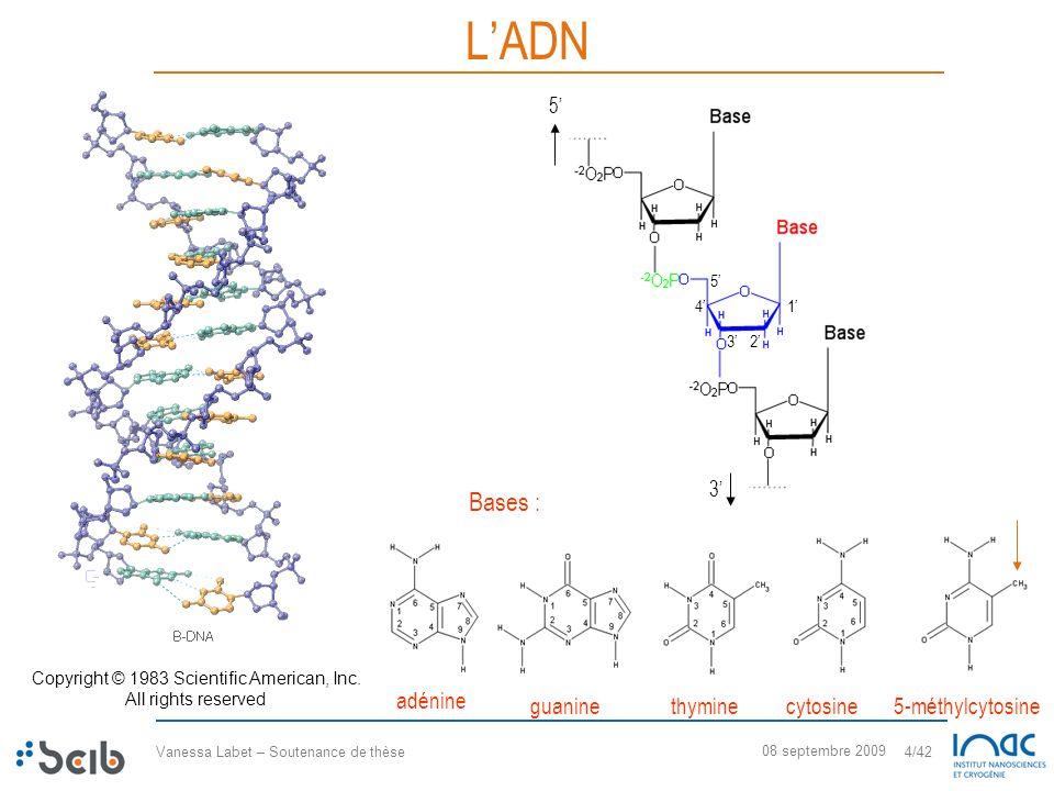 Vanessa Labet – Soutenance de thèse 4/42 08 septembre 2009 LADN 5 3 3 5 41 2 adénine guaninethyminecytosine5-méthylcytosine Copyright © 1983 Scientifi